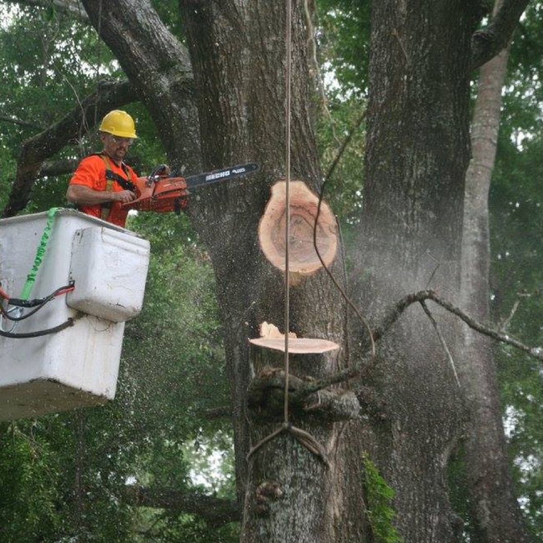 Get Started With Your Tree Removal Project in Anthony and Ocala, FL